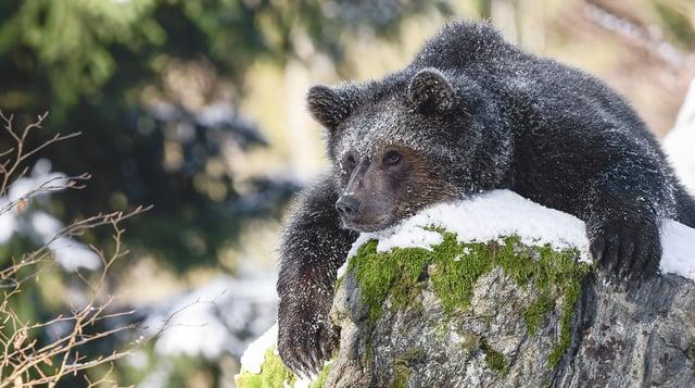 Visio-bear-2-18.jpg